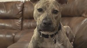 Hero' the dog saves child with diabetes | firstcoastnews.com