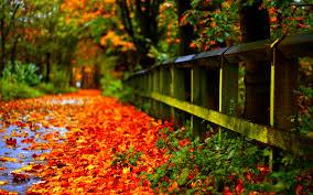 free autumn leaf 1920x1200
