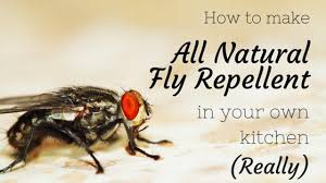 natural fly repellent you can make in