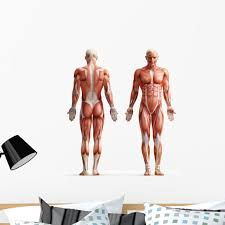Anatomy Muscles Wall Decal By Wallmonkeys Peel And Stick Graphic 36 In H X 36 In W Wm342743 Walmart Com Walmart Com