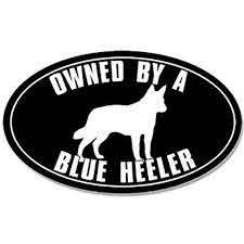 Oval Owned By A Blue Heeler Sticker Decal Australian Cattle Dog Size 3 X 5 Inch Walmart Com Walmart Com