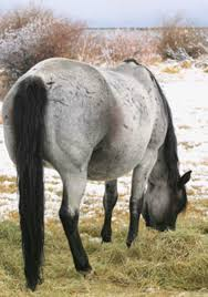 feed basics for pregnant mares expert