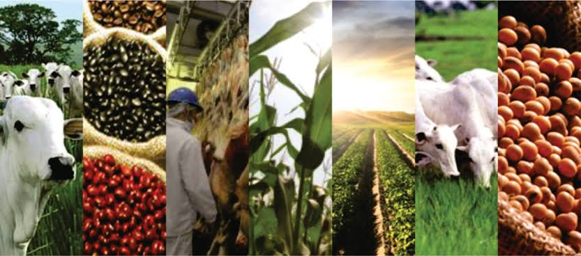 "Resultado de imagem para India agronegocios"""