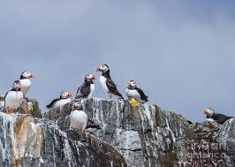 Puffin Rock Photograph By Nick Eagles