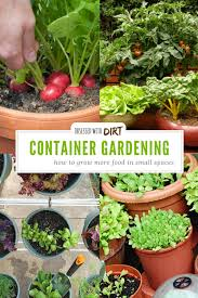 container vegetable gardening grow