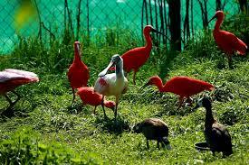 wisbroek ibis flamingo floating role