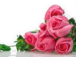 خلفيات ورود جميلة جدا صور ورود حلوة للموبايل والفيس بوك صباح الورد