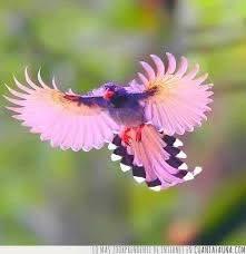 "Cuánta Fauna > La viva imagen de la majestuosidad"" /></p> <p style="