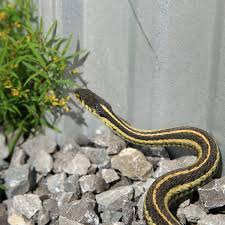 keep snakes away from yard house
