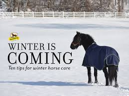 ten tips for winter horse care absorbine