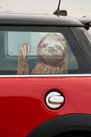 Sloth Car Decal Car Decals Sloth Car