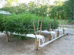 hydroponics worldwide an excellent