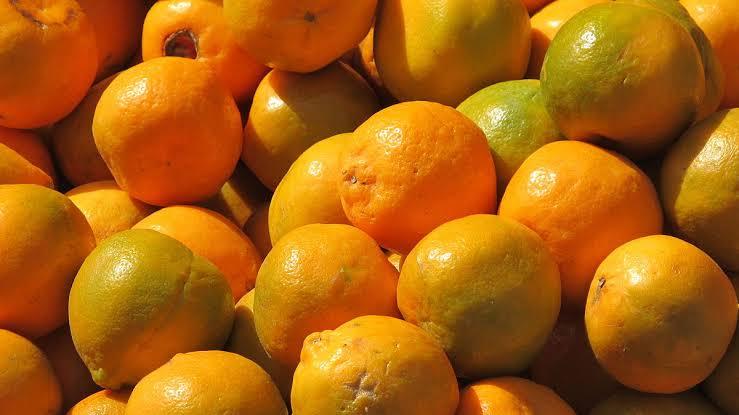 "Image result for संत्री"""