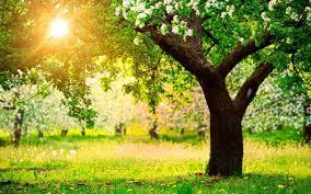 صور اشجار طبيعية صور اشجار طبيعية جذابة جدا كيوت