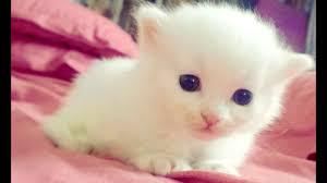 صوت قطة صغيرة جميل Youtube