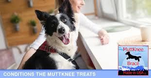 conditions we treat muttknee brace