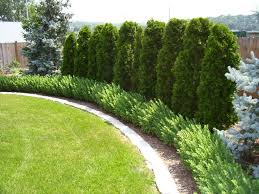 landscaping along fence on