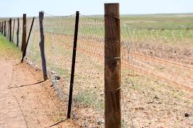 Rabbit Proof Fence And Its Connections To Australian History