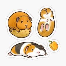 Guinea Pig Stickers Redbubble