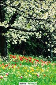 beautiful flower wallpaper wallpapers