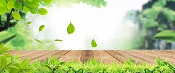 nature background photos and