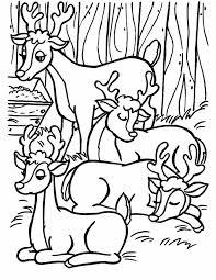 Kleuren Nu Vier Rendieren In Het Bos Kleurplaten