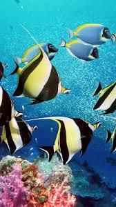 Aquarium Live Wallpaper Fish Tank Background Apk 2 7 Download