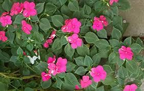 garden plants supplies products