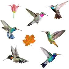Amazon Com Eacilles Hummingbird Window Cling Decals For Bird Strikes Anti Collision Bird Alert Stop Birds Flying Into Windows And Glass Doors 8 Pieces Arts Crafts Sewing