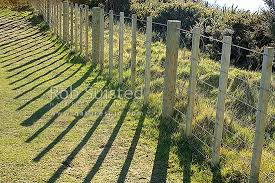 No 8 Fencing Wire And 7 Wire Farm Fence Post And Battens Casting Shadows On Grass Ground Gorse Background New Zealand Nz Stock Photo From New Zealand Nz Photos And Stock Photography By