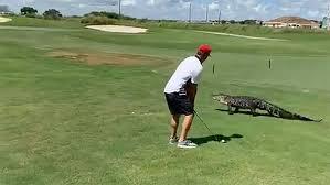 Central Florida Golfer Ignores Scary Alligator Strolling Next To Him Cnn