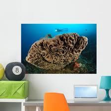 Salvador Dali Sponge With Wall Decal Design 7 Wallmonkeys Com