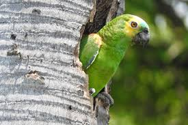 genes that make parrots into the humans