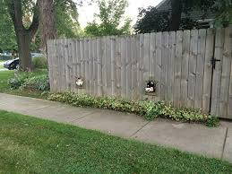 This Person Installed Dog Windows In The Fence So They Can Watch People Walk By