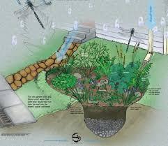 rainwater harvesting rain gardens