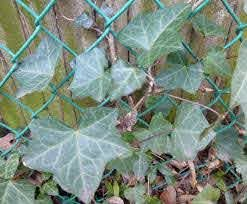 Don T Let English Ivy Leap The Garden Bench