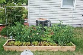 vegetable vegetable garden garden