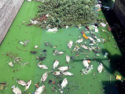 Image result for sabarmati fish death""