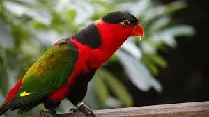 اجمل صور طيور بألوان رائعة و مذهلة Hd 2020