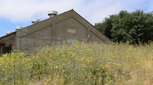 In Vallejo, 'Bureaucratic Bullying' Threatens a Nature Preserve and  Unlikely Arts Hub | KQED