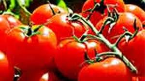 Cultura de roșii în gradină și solarii. Plantare, îngrijire și ...