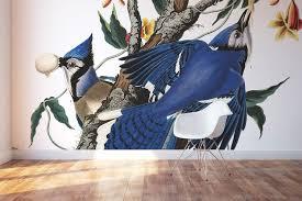 Vintage Blue Jays Wallpaper Mural Birds Of America Art Eazywallz