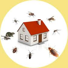 Nitish Pest Control, Hitech City - Residential Pest Control Services in  Hyderabad - Justdial