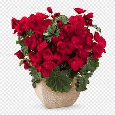 باقة من الزهور وردة حمراء زهور Love نبات عشبي Png