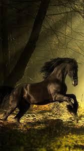 خيول خلفيات حية حصان خلفيات متحركه For Android Apk Download