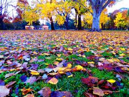 Ballarat True Colours Autumn May 2017 – Jennifer Ramirez Baulch