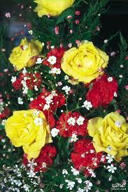 صور طبيبعية ورود وزهور مجموعة من الزهور بألوان طبيعية خلابة حسناء