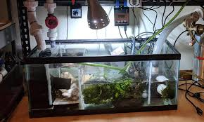 8 best aquarium sumps reviewed and