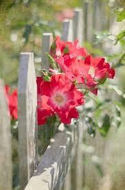 Divinespirit3 Via Pinterest Discover And Save Boulevard Of Dreams Beautiful Flowers Pretty Flowers Flower Garden