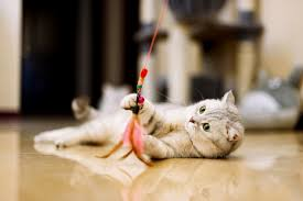 7 simple cat games your kitty will go